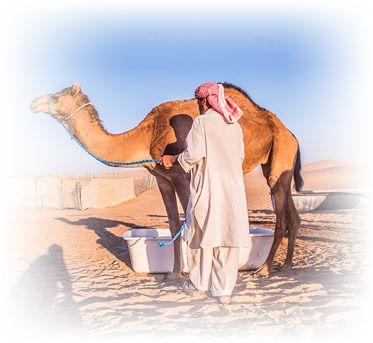 desert farms camel milk tub