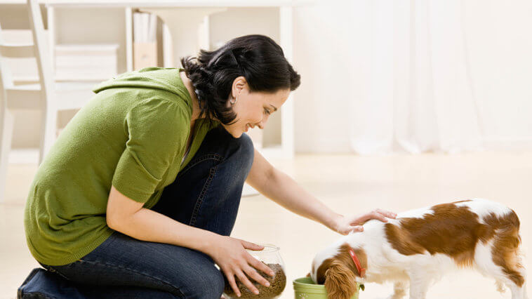 Best Dog Food woman feeding pet