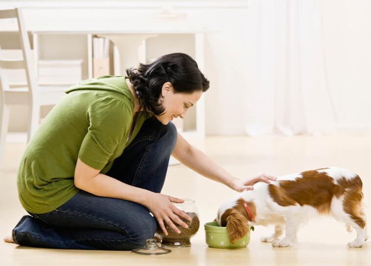 Best Dog Food woman feeding pet