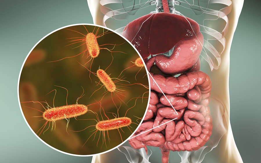 Intestinal-Microbiome-bacteria-foodborne illness