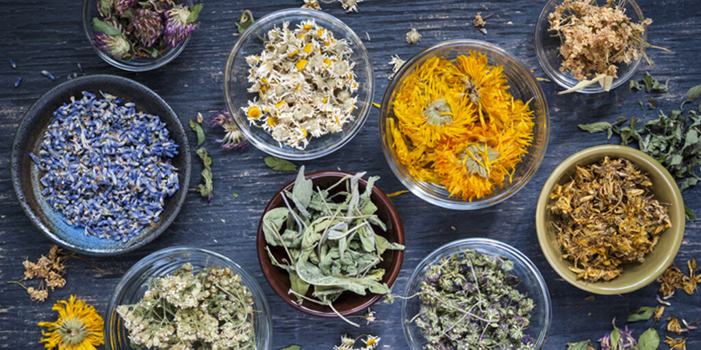 Healing Herbs You Should Know