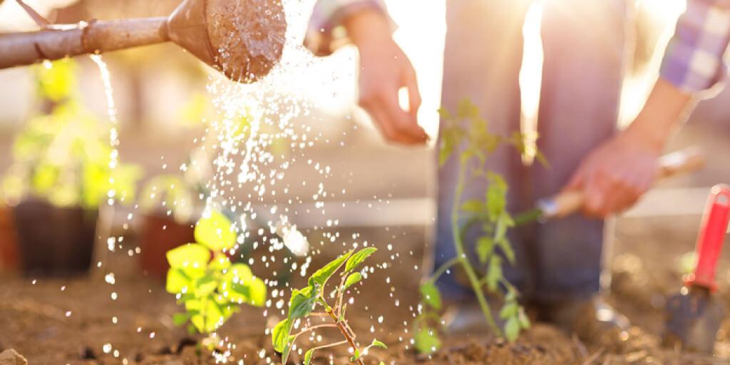 How Do You Grow a Healthy Garden