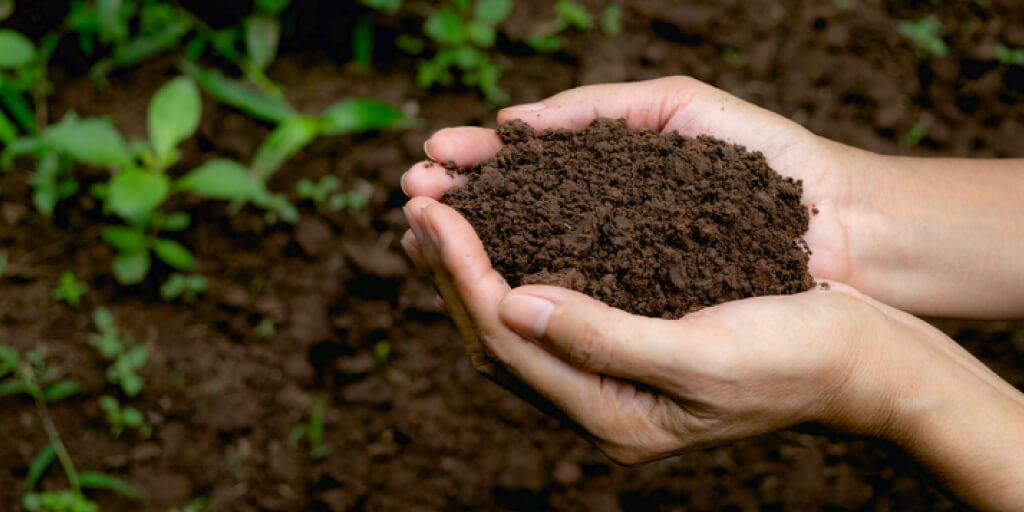 How Does Planting a Garden Help the Environment