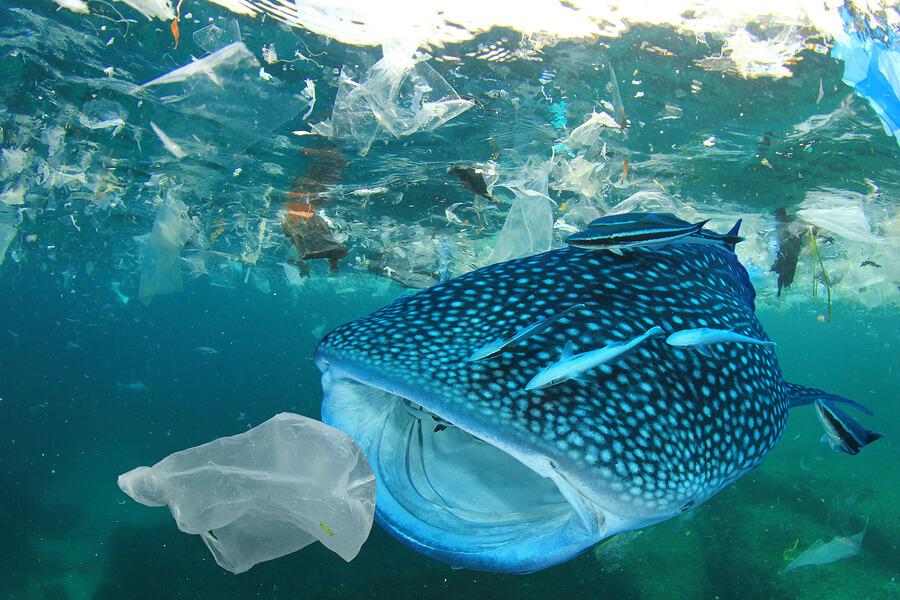 Plastic-ocean-pollution-Whale