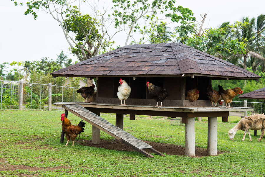 Chicken coop types