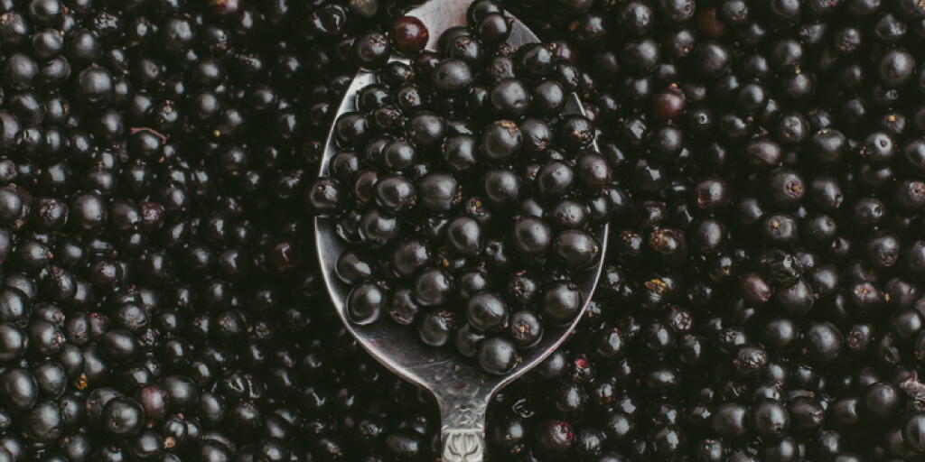 Is it Safe to Eat Elderberries Straight