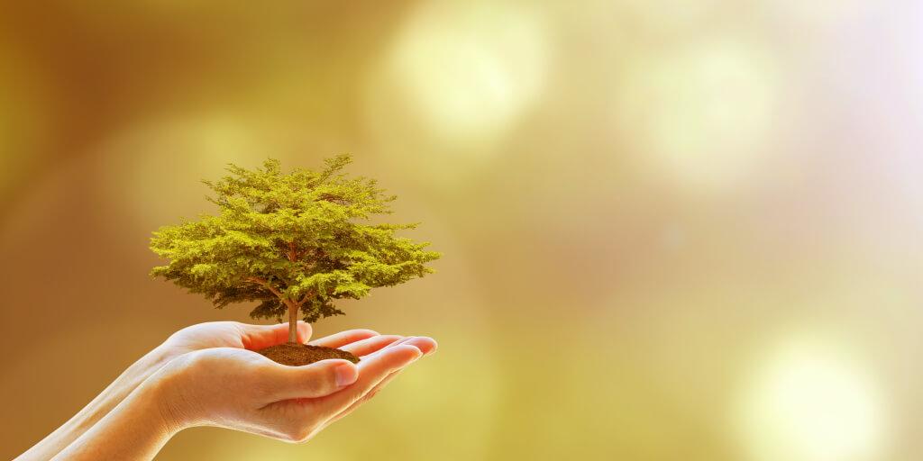 Greenwashing_To