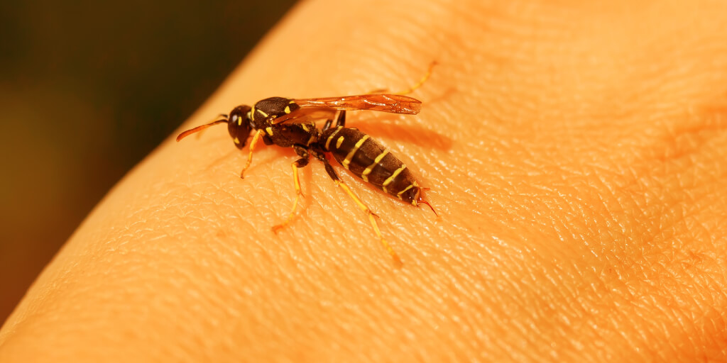 Natural Bee Sting Remedies for Quick Relief_Draw Out