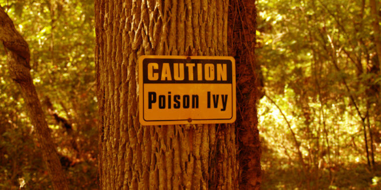 The Best All-Natural Poison Ivy Home Remedies_Title_